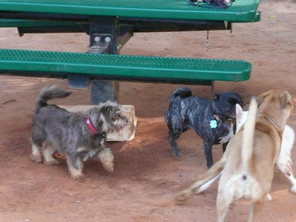 dogparkreggie2012