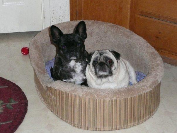 Reggie and Lizzie Roberts Dec. 22, 2009