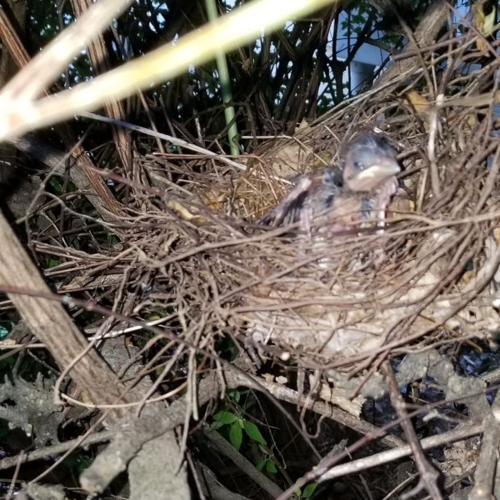 Baby bird in the nest